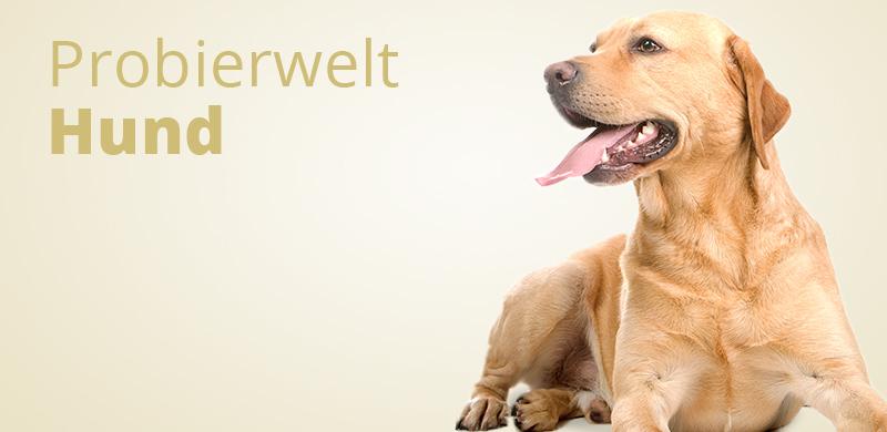 Probierwelt Hund