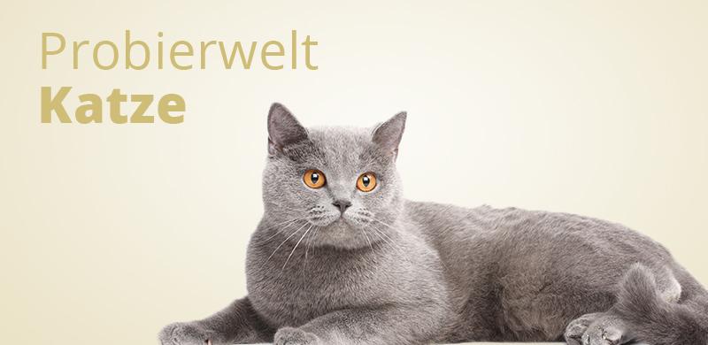 Probierwelt Katze