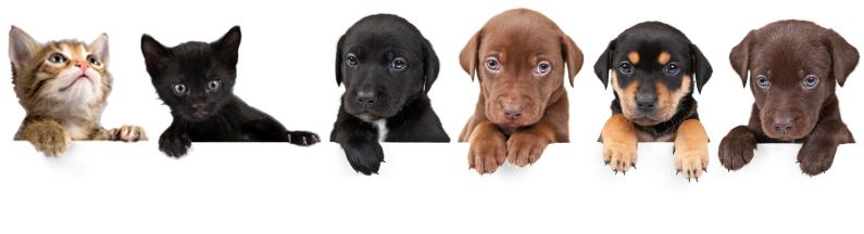Das beste Hundefutter und Katzenfutter online bei pets Premium - Philosophie