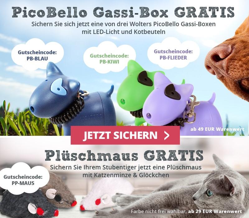 Gassibox und Plüschmaus