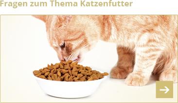 Fragen zum Thema Katzenfutter