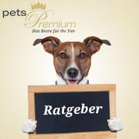 Infothemen pets Premium Link
