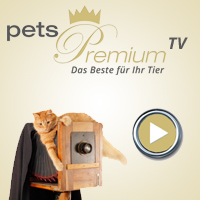 Video Blog pets Premium