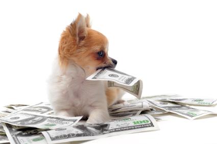 Attraktive Preise pets Premium