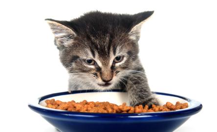 Hochwertiges Produktsortiment pets Premium