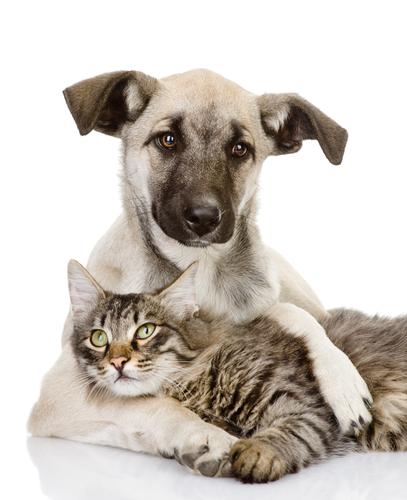Newsletter abbestellen - pets Premium