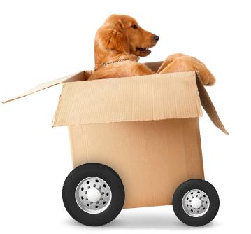Kostenlose und schnelle Lieferung - pets Premium