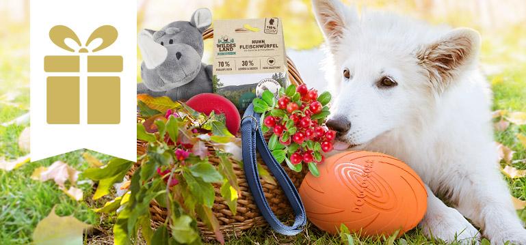 Geschenk gratis Aktion Hund