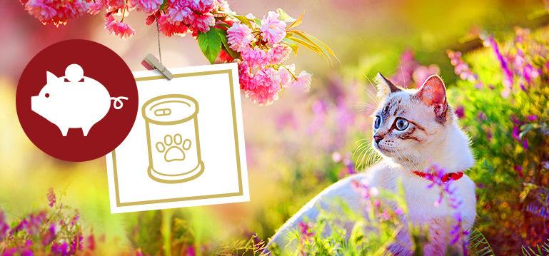 Nassfutter Angebote für Katzen