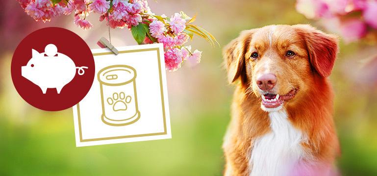 Nassfutter Angebote für Hunde