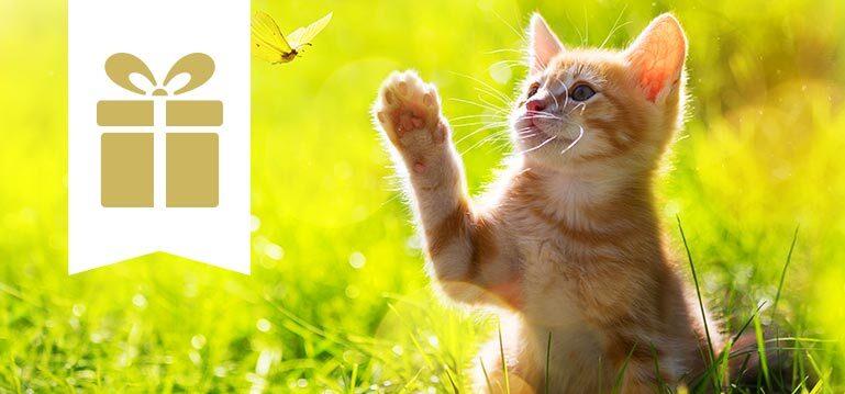 Trockenfutter Angebote für Katzen