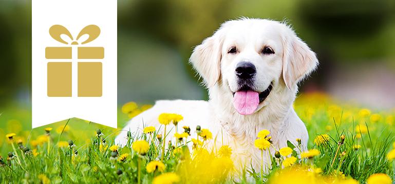 Trockenfutter Angebote für Hunde