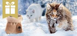 Trockenfutter Aktion Katze - Kleiner Sack gratis