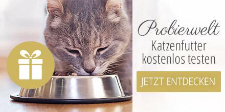Probierwelt - Katze