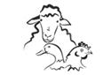 Frostfutter Lamm und Geflügel