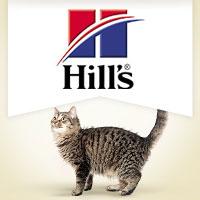 Hill's Feline Senior