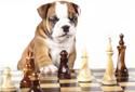 Intelligenz, Beschäftigung & Kauspiele