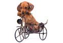 Hunde mit Fahrrad