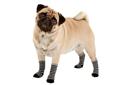 Socken & Schuhe für Hunde