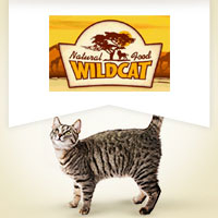 Wildcat Adult