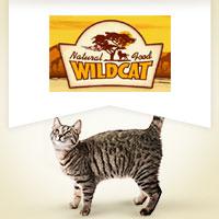 Wildcat mit Fisch
