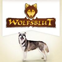 Wolfsblut mit Wild