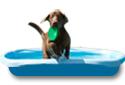Wasserspielzeug, Hundepool und Co.