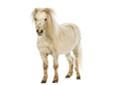 Pferdemüsli ohne Getreide