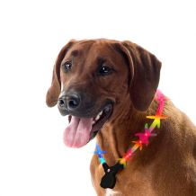 Wolters - Hundehalsband - Nightshift Leuchthalsband multicolor