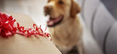 GratisGeschenke Hundesnacks