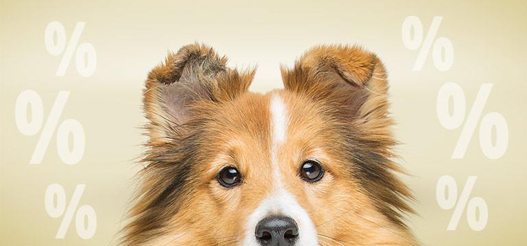 PremiumSales Hundenassfutter