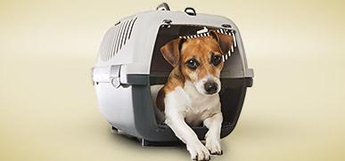 Transport- und Reiseartikel für Hunde