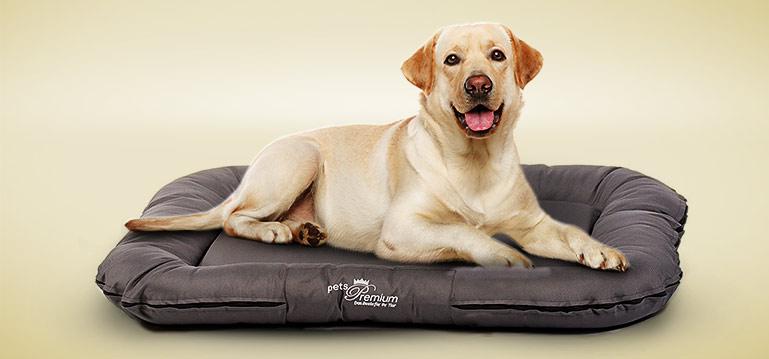 Schlafplätze für Hunde