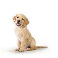 Hundenassfutter Welpe