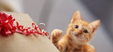 Gratis Geschenke Katzensnacks