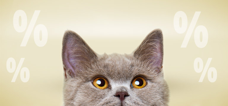 Premium Sales Katzenfutter