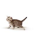 Kitten Katzennassfutter