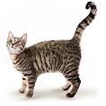 Adult Katzennassfutter