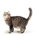 Senior Katzennassfutter