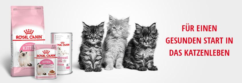 K tipp katzenfutter trockenfutter