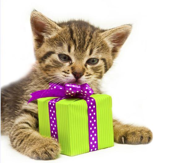 Geschenkgutschein pets Premium