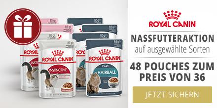 Royal Canin 36+12 gratis