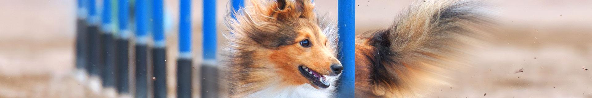 Hundezubehör für Ausbildung und Training
