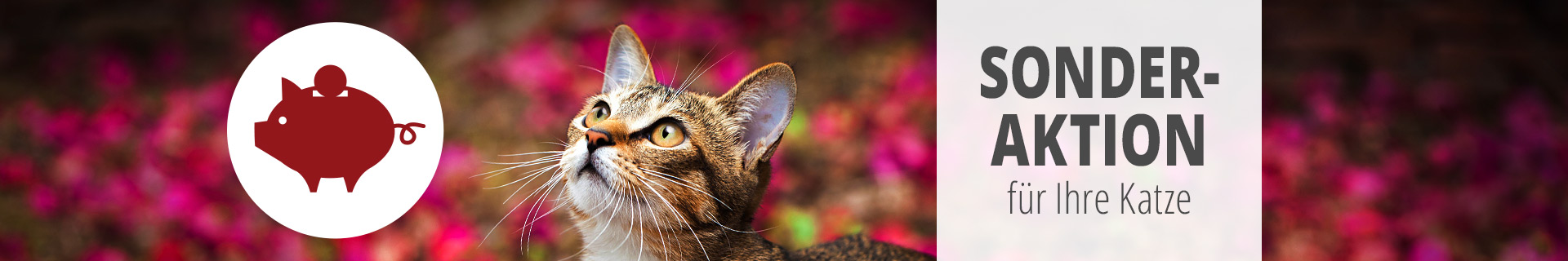 Sonderaktion Katze