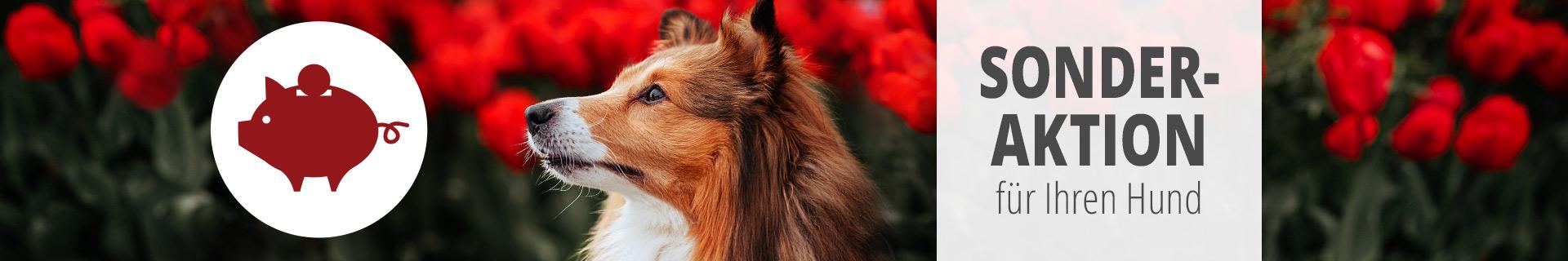 Sonderaktion Hund