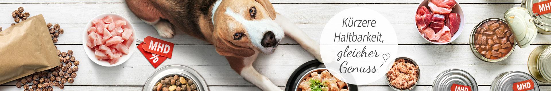 Rabatt Aktion Hunde